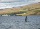 Andarnefja á Akureyrarpolli (mynd Tómas Árnason)